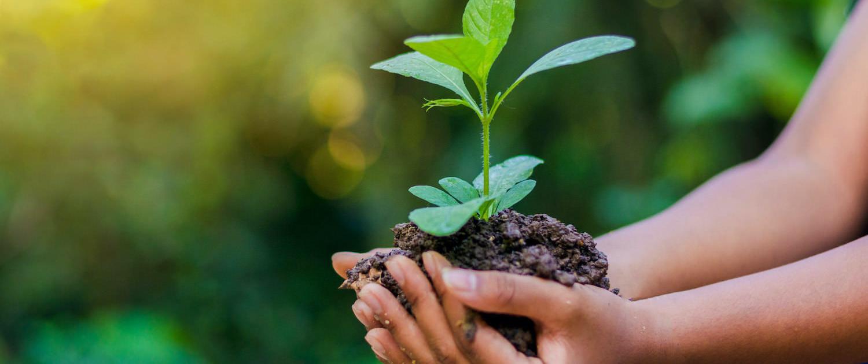 Rundum Yoga & Treedom #YogiWald